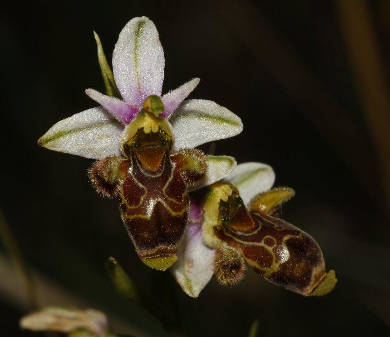 orquidea_8178.jpg
