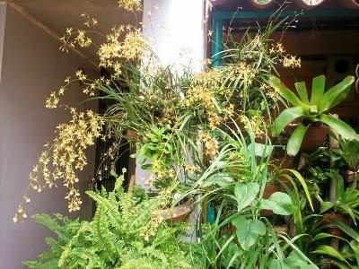 orquideadeanapatricia-1.jpg