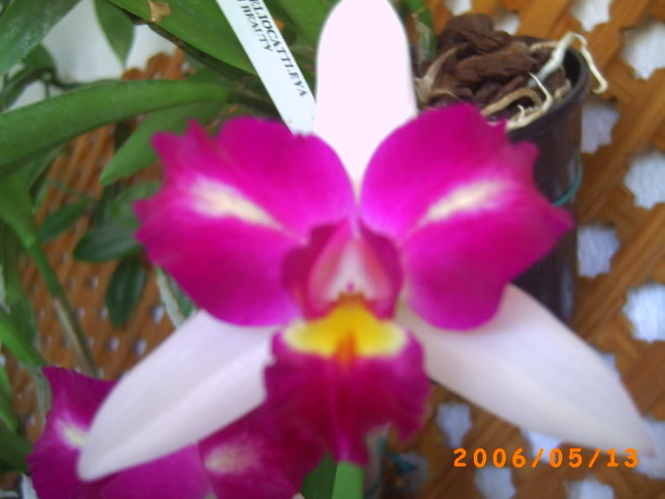 orquideas004.jpg