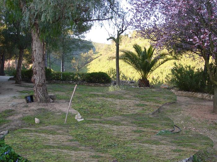 palmera 2.psd.jpg