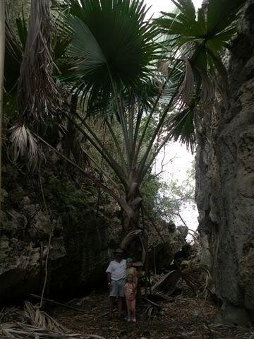 palmierganttsingy2.jpg