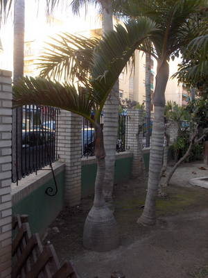 Parque_El_Majuelo_4_3_2007_050_red.jpg