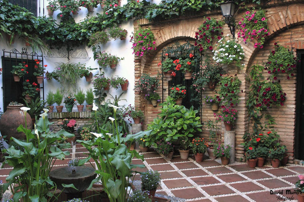 patios-de-cordoba_6133411.jpg