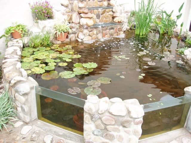 Estanque quiero hacer para 10 tortugas y peces ayuda - Como construir un estanque para tortugas ...