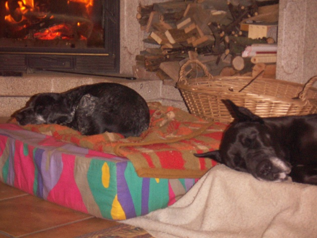 perritos durmiendo2.JPG