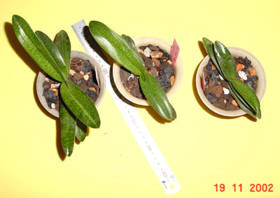 phapio5.jpg