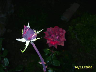 PIC_0130.JPG