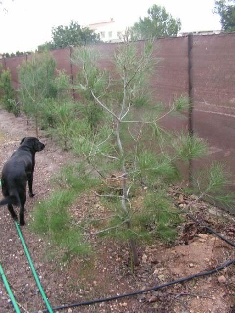 Bons is en tierra quiero preparar - Tierra para bonsais ...