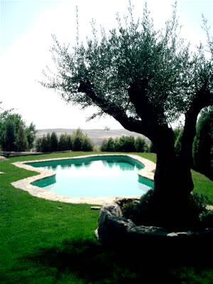 piscina_cesped006.jpg