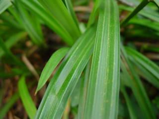 Plant%20028.jpg