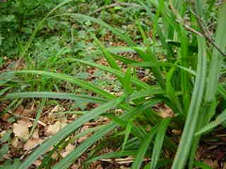 Plant%20029.jpg