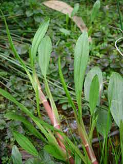 Plant%20031.jpg