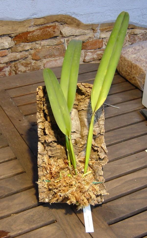 Planta%20montada%7E0.jpg