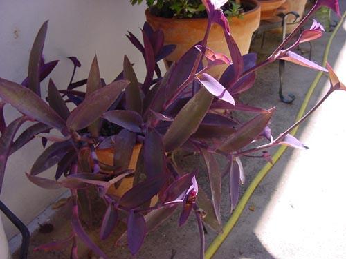 planta1.jpg