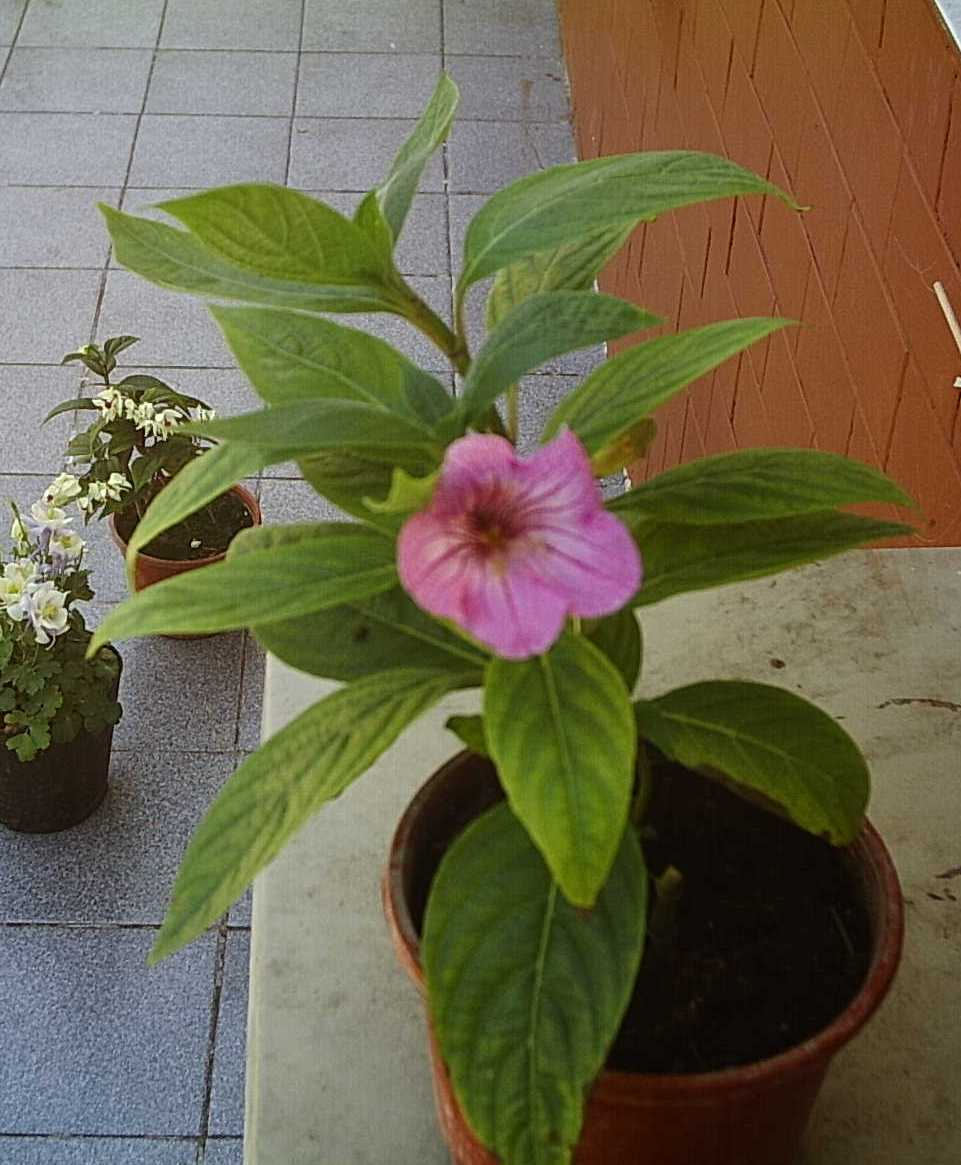 planta3%7E0.JPG