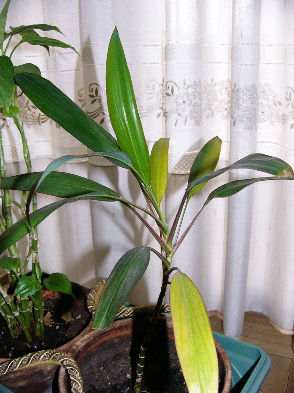 Planta_02.jpg