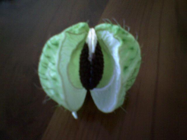 plantadesc3.jpg
