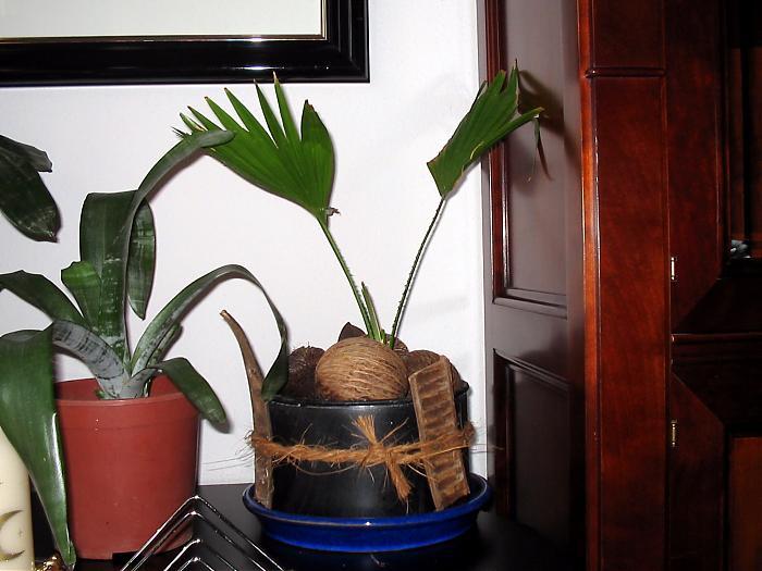 Plantas 018.jpg