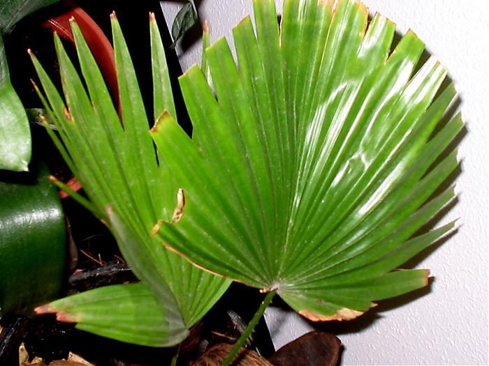 Plantas 020.jpg