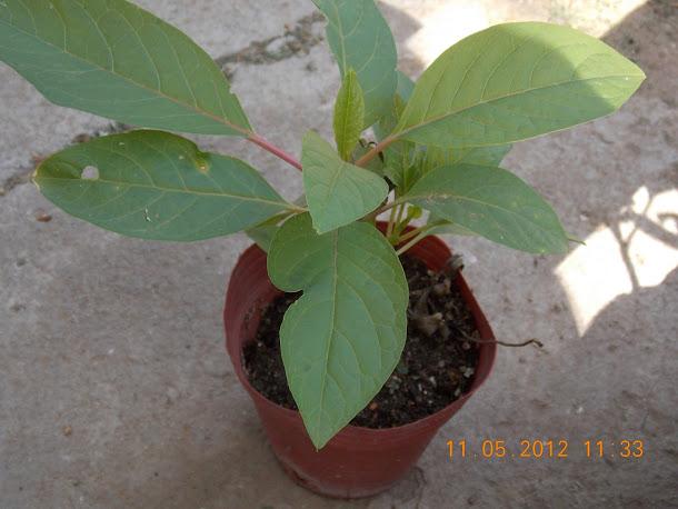 Plantas+aut%25C3%25B3ctonas+Rodrigo+001.JPG