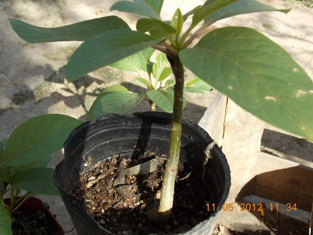 Plantas+aut%25C3%25B3ctonas+Rodrigo+003.JPG