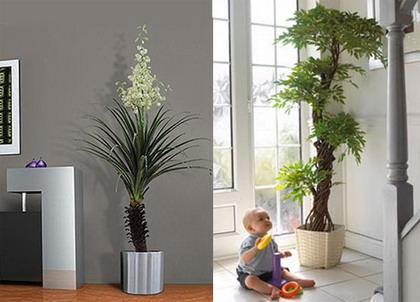 plantas-para-decorar1.jpg