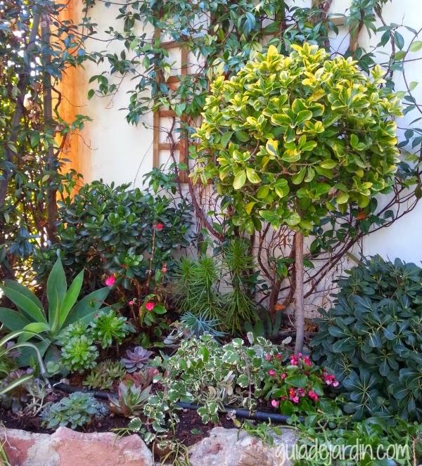 plantas1.jpg