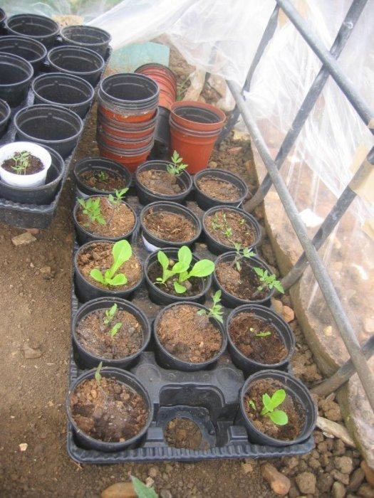 plantel2.jpg