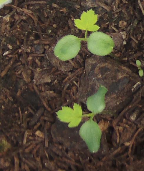 plantinesparaid-1.jpg