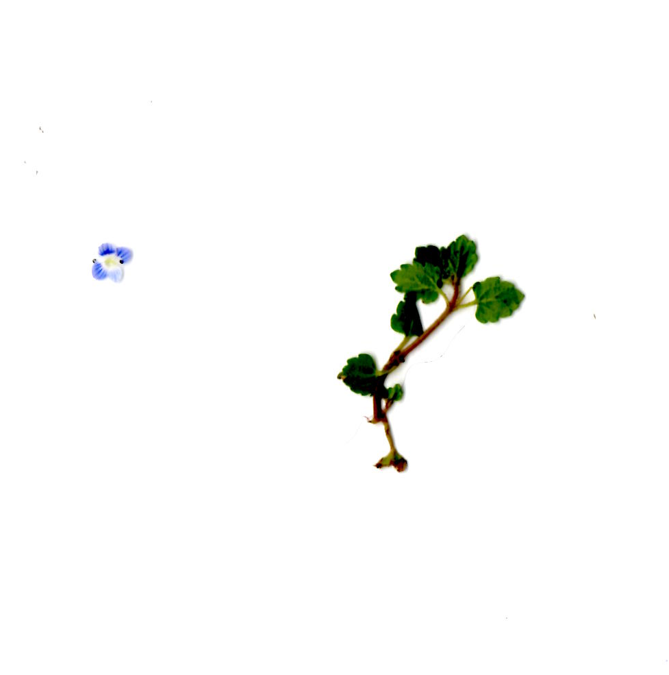 Plantita.png