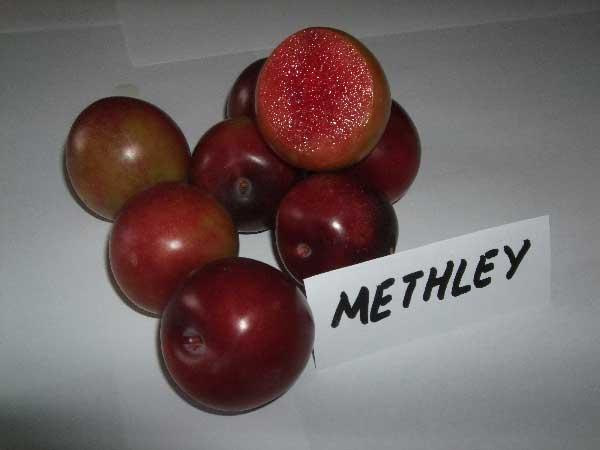 PRUNIER-metley-1269390129a.jpg