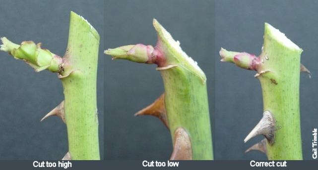 pruningcuts.jpg