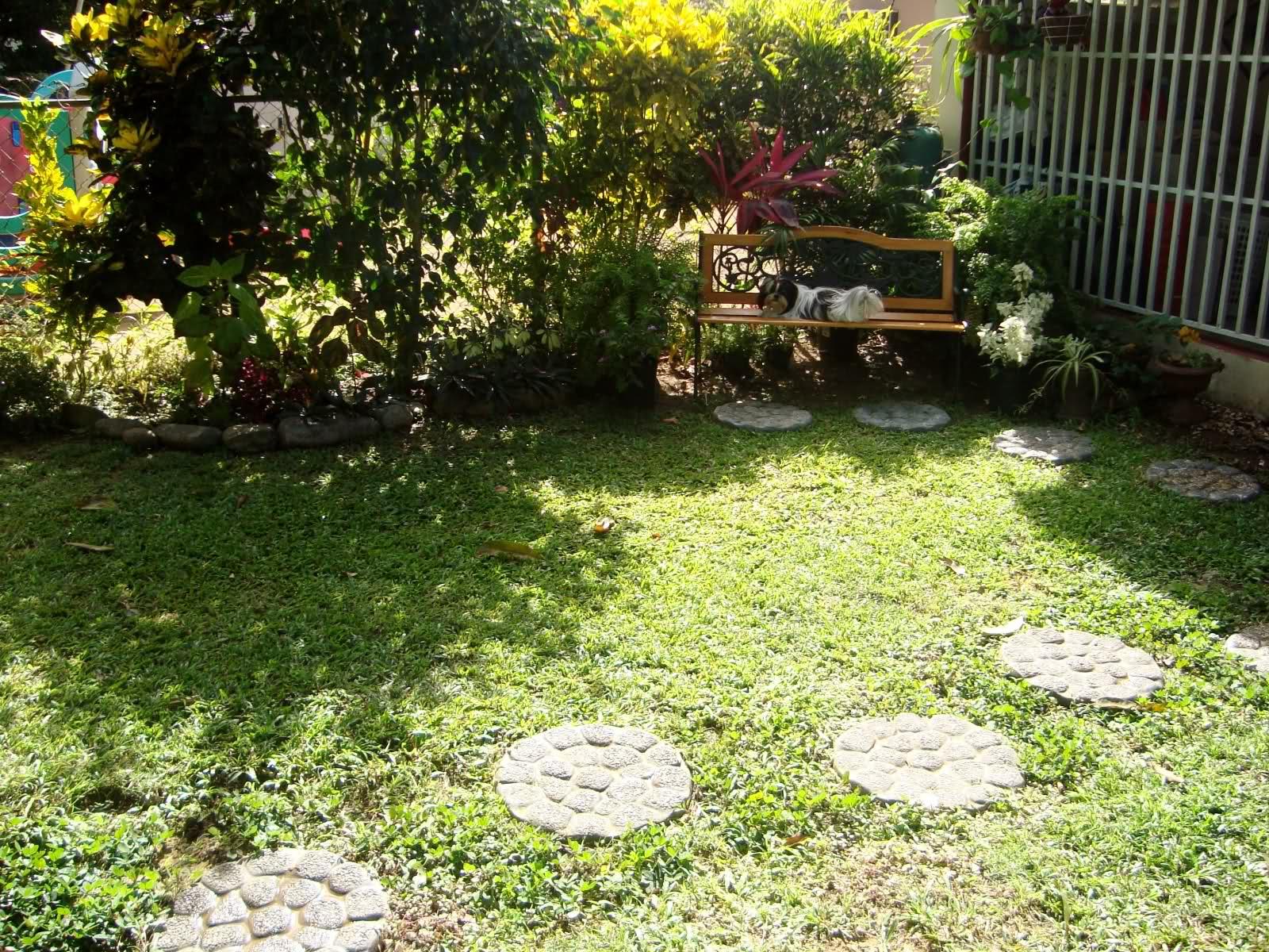 Fotos de mi jard n tropical p gina 5 for Como puedo arreglar mi jardin