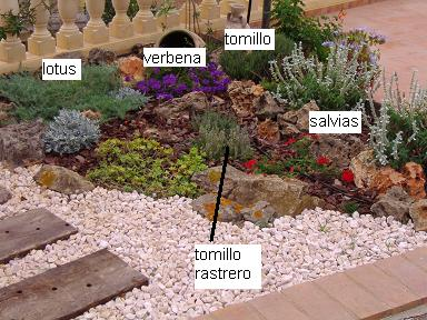 Plantas para rocalla que est n verdes todo el a o y aguanten el viento fuerte - Mi jardin con enanitos ...