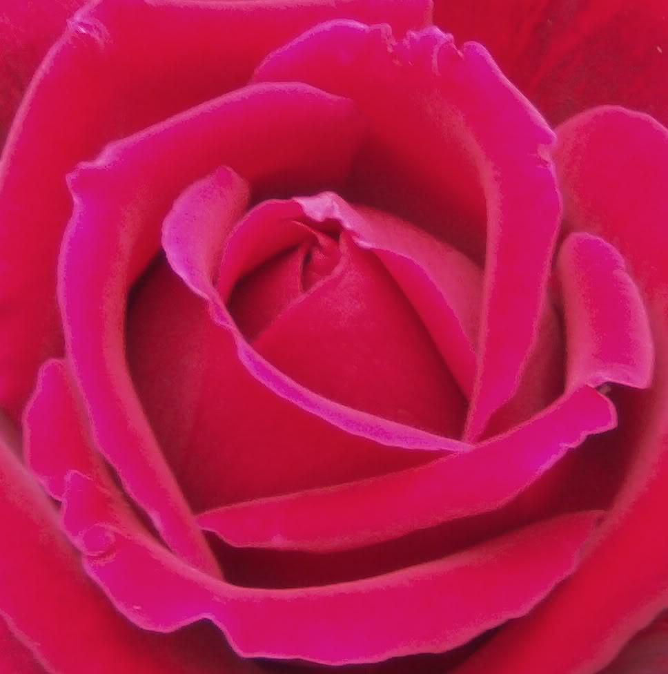 rosarojacentro.jpg