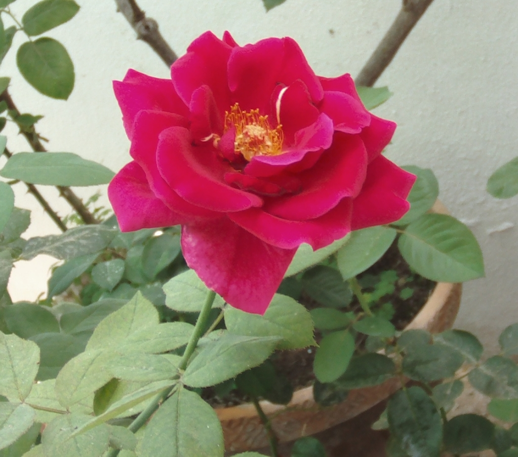 rosarojoanaranjado2.jpg