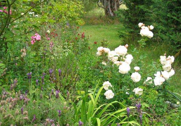 rose-english-garden.jpg