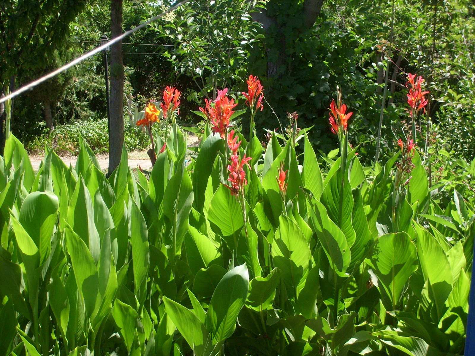 Rincones y plantas de mi jard n p gina 11 for Plantas para mi jardin