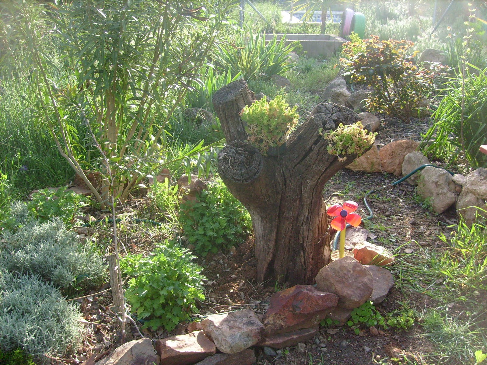 Rincones y plantas de mi jard n p gina 15 for Arreglar un jardin