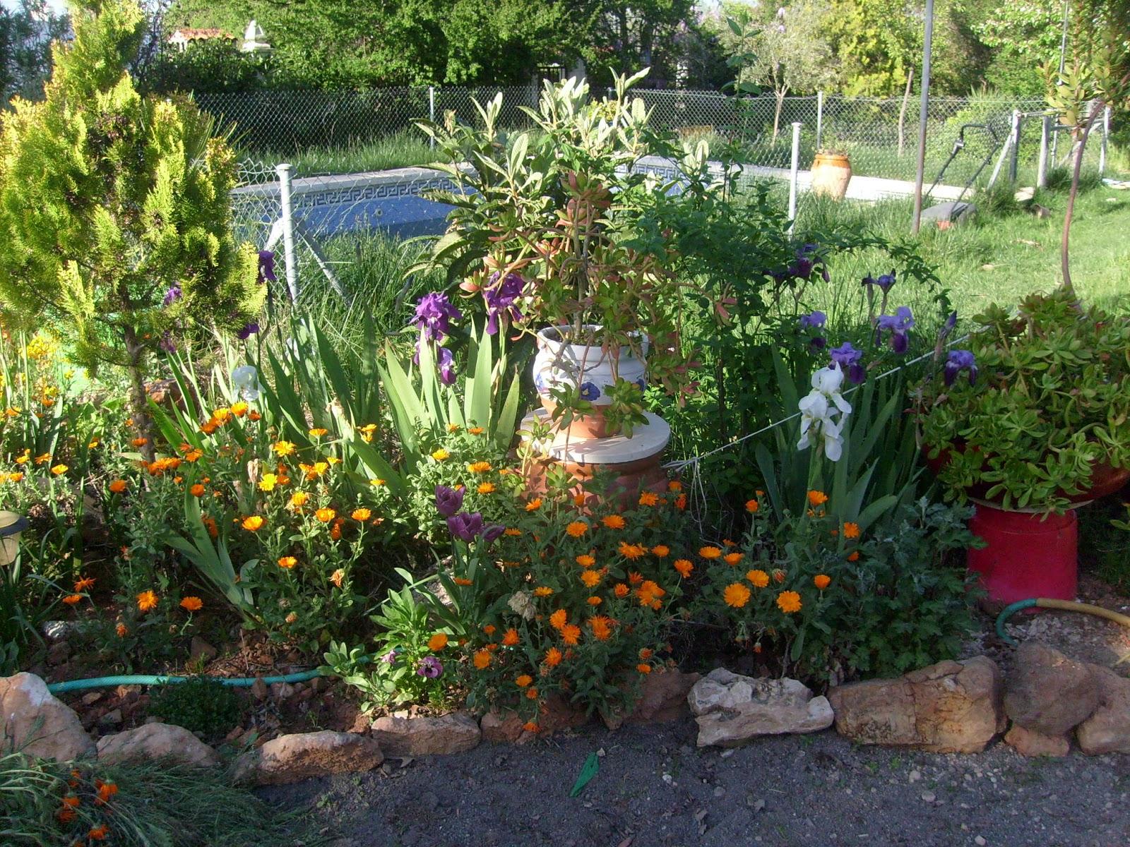 Rincones y plantas de mi jard n p gina 15 for Como arreglar mi jardin con piedras