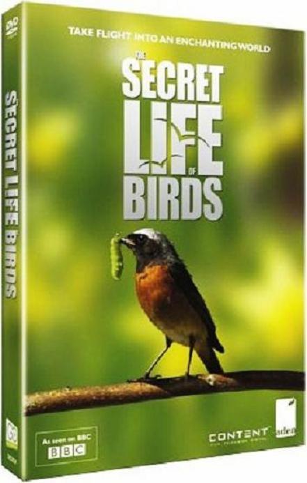 Secret-Life-of-Birds-Cover.jpg