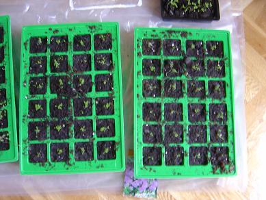 semilleros%20002.jpg