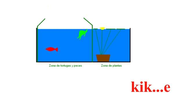 separaciontortugas-peces-plantas.jpg