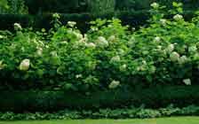 seto-libre-hortensias.jpg