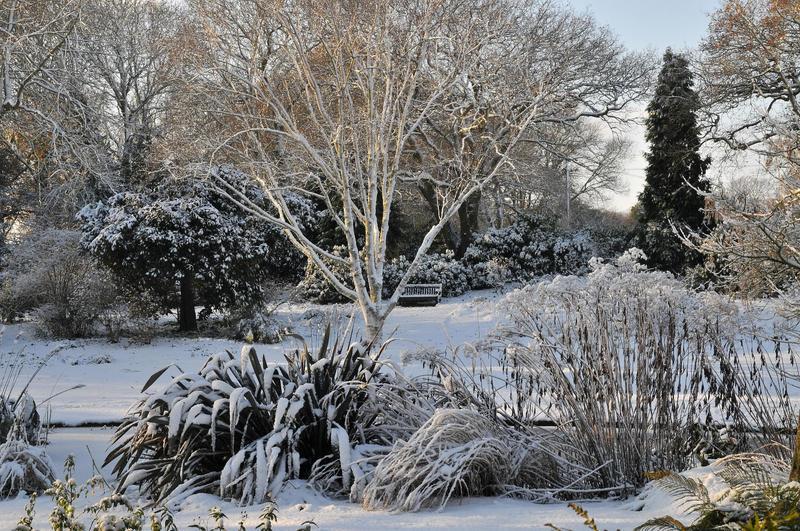 snowfew.jpg