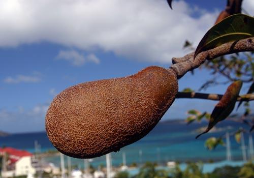 stinkingtoefruit.jpg