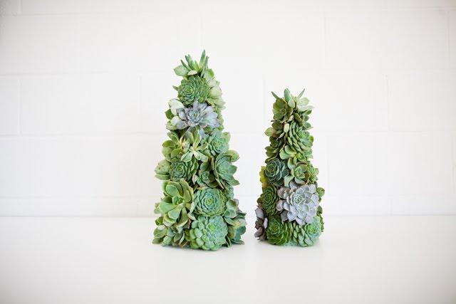 succulent%2Btrees.jpg