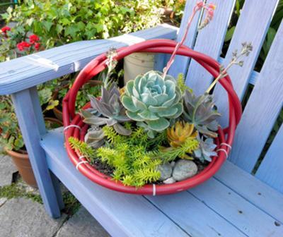 succulent-hose-baskets-21506465.jpg