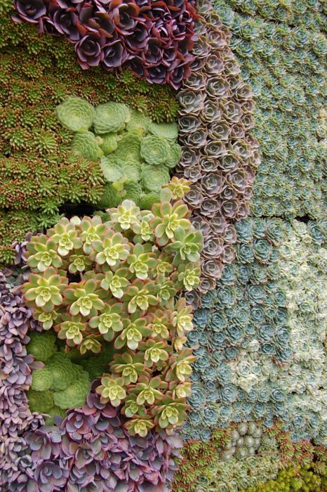succulent-wall-1.jpg