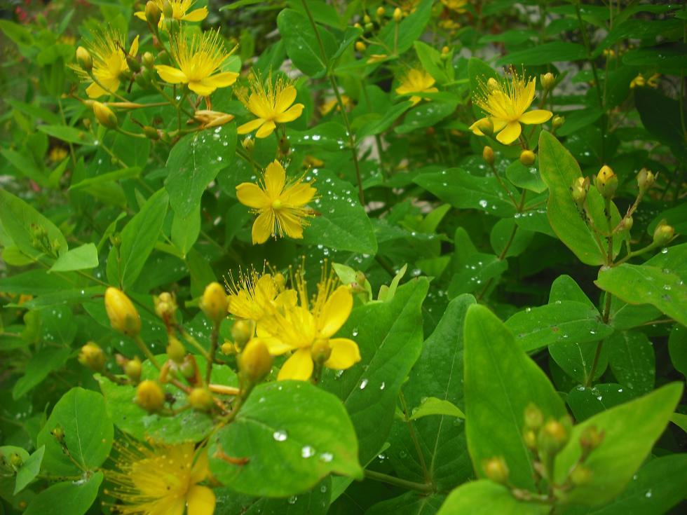 Este arriate ha cambiado muchas veces de plantas p gina 49 - Arriate plantas ...